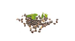 OREGANO AND CHIA